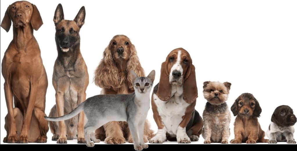 Dog Hairballs Natural Remedies