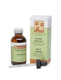 anxiety relief for dogs trauma recovery vancouver
