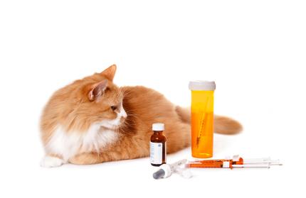ways to get rid of fleas on kittens
