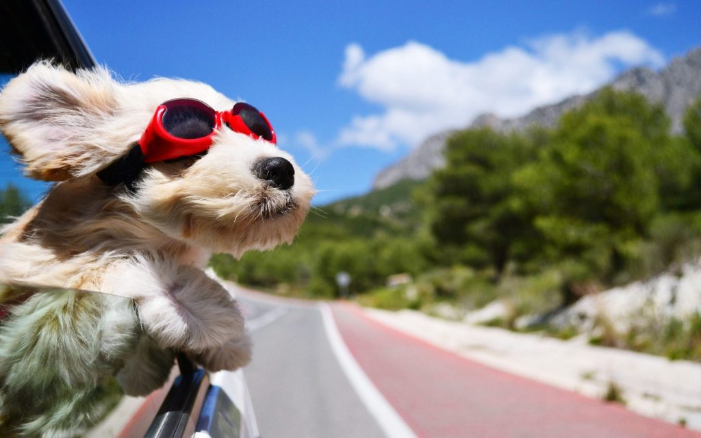 Road trip with a dog