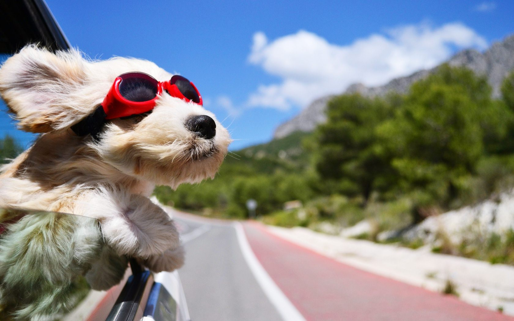 Summer Travel Tips for Raw Fed Dogs - True Carnivores