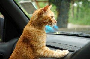 cat road trip