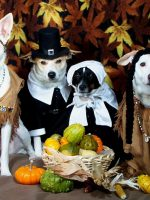 Thanksgiving Tips And Foods To Avoid