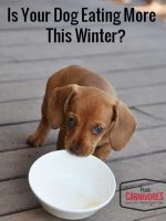 Has Your Dog's Appetite Increased This Winter?