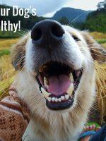 Keeping Your Dogs Teeth Healthy