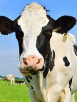What is Colostrum? And why should my pet have it?