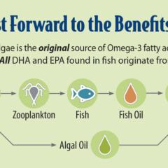 Grizzly Algal Plus Oil