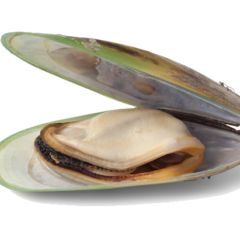 Carnivore Care Green-Lipped Mussel